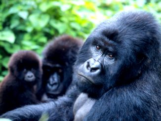 Review: Bwindi Impenetrable National Park