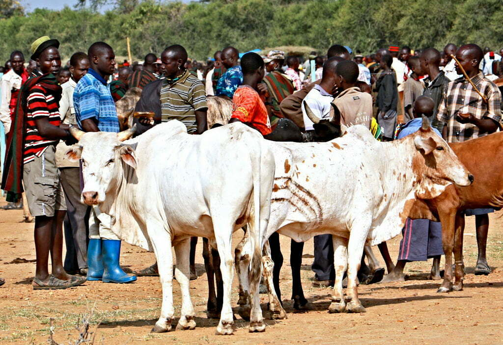 Foot And Mouth Disease kills over 350,000 cattle in uganda