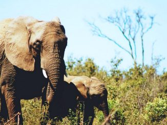 Stray elephants cause panic in Kaabong