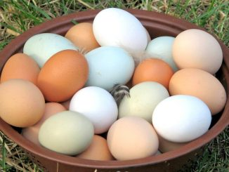 There are no 'fake eggs' in Uganda – UNBS