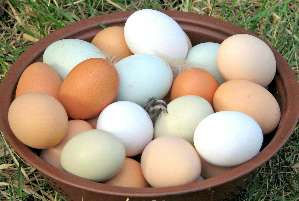 There are no fake eggs in Uganda – UNBS