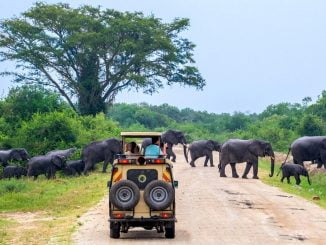 Tourism in Uganda grew slower in 2019 – Bank of Uganda