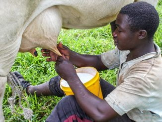 Kenyan authorities raid distributors of Ugandan milk