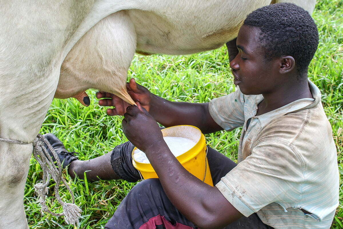 Prohibition of sale of milk and emerges from milk in Rwanda