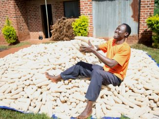 Uganda gov't urges farmers to embrace Zimbabwe maize export deal