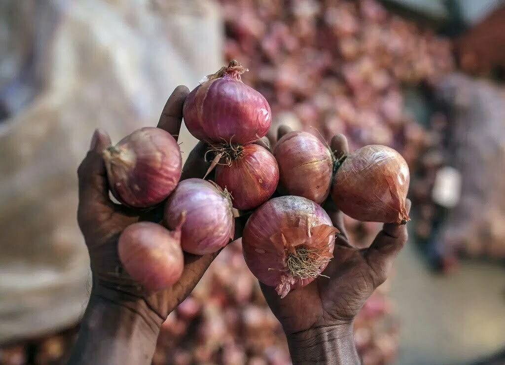 Onion prices rise
