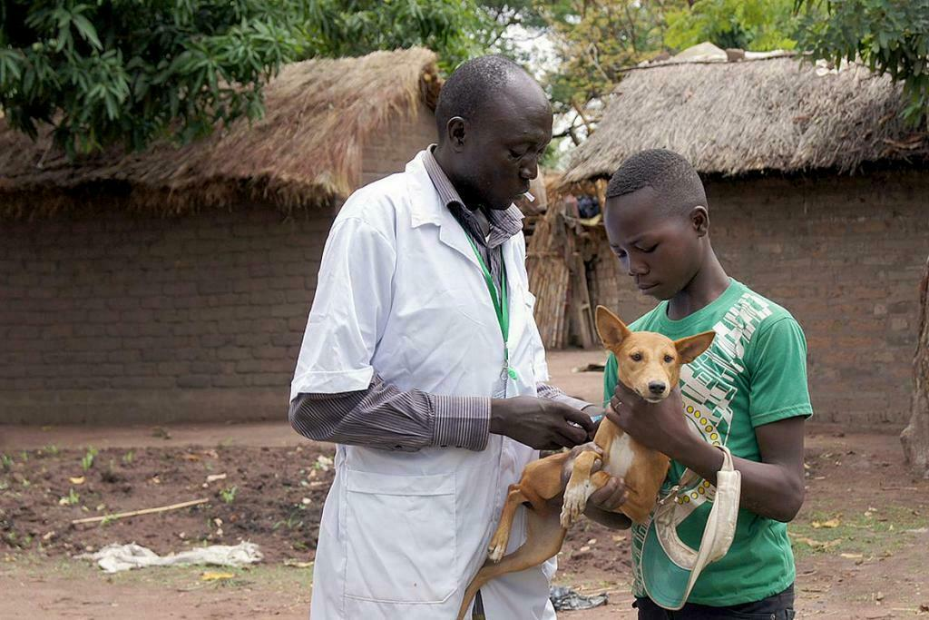 dog-vaccination-zoonotic- diseases