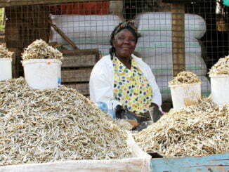Silverfish prices high in Gulu despite increased supply