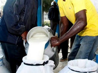 Mbarara based Pearl Dairy Farms lays off over 1,500 workers