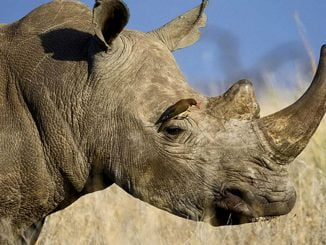 Tourism sector demands reopening of Ziwa Rhino Sanctuary